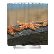 Sea Star Trio Shower Curtain