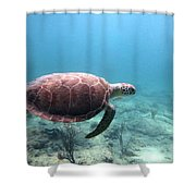 Sea Turtle 5 Shower Curtain
