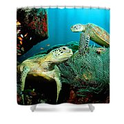 Sea Turtle Oil On Canvas Shower Curtain
