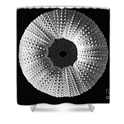 Sea Urchin In Black And White Shower Curtain
