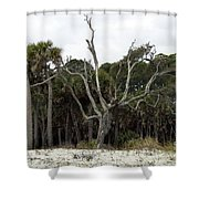 Sea Washed Oat Tree Shower Curtain