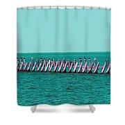 Seabird Lineup Shower Curtain