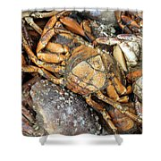 Seafood Shower Curtain