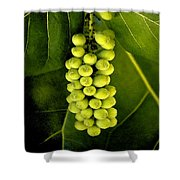 Seagrape Cluster Shower Curtain