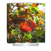 Seagrape Leaves Shower Curtain