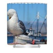 Seagull 3 Shower Curtain
