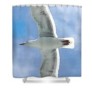 Seagull 3 Shower Curtain