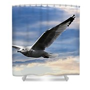 Seagull And Clock Tower Shower Curtain by Bob Orsillo