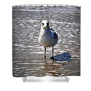 Seagull At Low Tide Shower Curtain