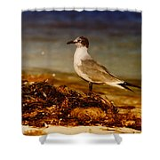 Seagull At The Keys Shower Curtain
