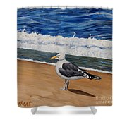 Seagull At The Seashore Shower Curtain