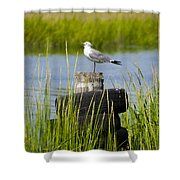 Seagull At Weeks Landing Shower Curtain by Bill Cannon