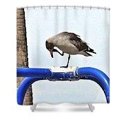 Seagull Balancing Act Shower Curtain