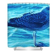 Seagull Basking In The Sun Shower Curtain