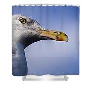 Seagull - Cape Neddick - Maine Shower Curtain