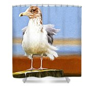 Seagull Colors Shower Curtain
