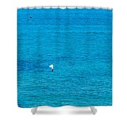 Seagull Cruising Over Azure Blue Sea Shower Curtain