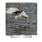 Seagull Dive Shower Curtain