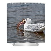 Seagull Eating Huge Fish In Water Art Prints Shower Curtain