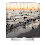 Seagulls Feasting Shower Curtain