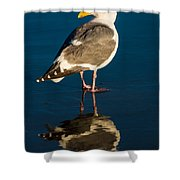 Seagull Harris Beach - Oregon Shower Curtain