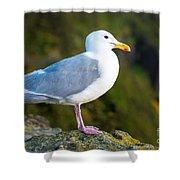 Seagull Heceta Head - Oregon Shower Curtain