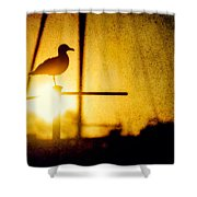 Seagull In Harbor Sunset Shower Curtain