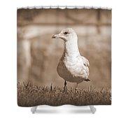 Seagull In Sephia Shower Curtain