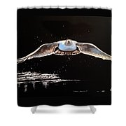 Seagull In The Moonlight Shower Curtain