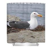 Seagull Nest Shower Curtain