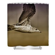Seagull Oil Shower Curtain by Deborah Benoit