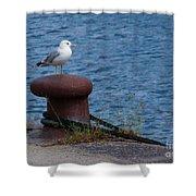 Seagull On A Bollard  Shower Curtain
