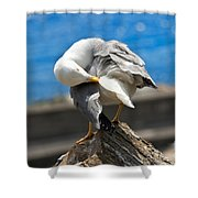 Seagull On A Rock Shower Curtain