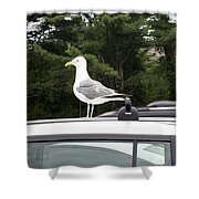 Seagull On Car Shower Curtain