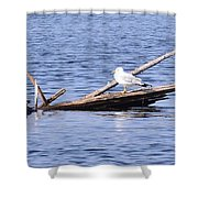 Seagull On Driftwood Shower Curtain