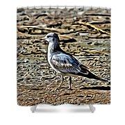 Seagull On The Beach Shower Curtain
