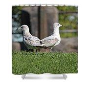 Seagull Opposites Shower Curtain