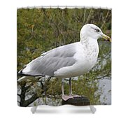 Seagull Outlook Shower Curtain