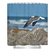 Seagull Parallel Shower Curtain