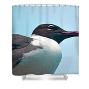 Seagull Portrait Shower Curtain