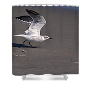 Seagull Preparing To Fly Shower Curtain
