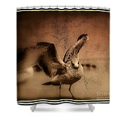 Seagull Ready To Fly Shower Curtain