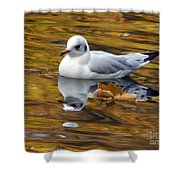 Seagull Resting Among Fall Leaves Shower Curtain