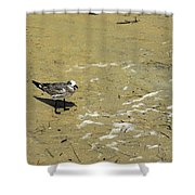 Seagull Scurry  Shower Curtain
