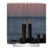 Seagull Seascape Shower Curtain