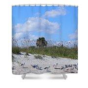 Seagull Siesta Shower Curtain