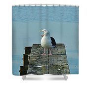 Seagull Squawk 1/13  Shower Curtain