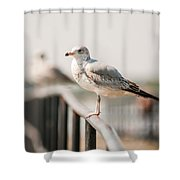 Seagull Standing On Rail Shower Curtain