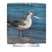 Seagull With Fish 1 Shower Curtain
