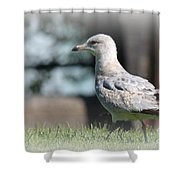Seagulls 1 Shower Curtain
